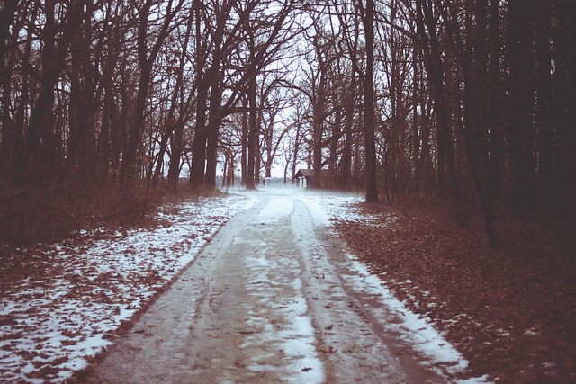 cabin-cute-forest-preserve-ice-path-Favim.com-143768